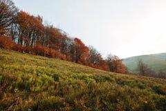 Forêt rouge d'automne sur le bois de montagne à carpathien images stock
