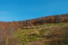Forêt rouge d'automne sur le bois de montagne à carpathien photos stock