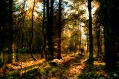 Forêt rouge mystique Image libre de droits