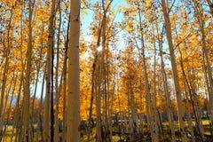 Forêt rougeoyante Images libres de droits