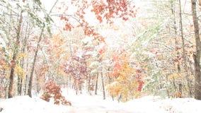 Forêt rougeoyante lumineuse d'hiver banque de vidéos