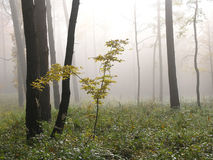 Forêt, Roztocze, Pologne Photo libre de droits