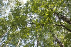 Forêt russe Image stock