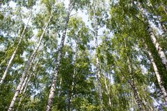 Forêt russe Images stock