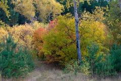 Forêt russe d'automne colorée photographie stock