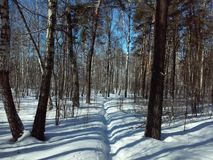 Forêt russe en hiver Image libre de droits