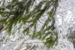 Forêt russe pendant le jour givré de janvier après la tempête de neige de neige la plus forte photographie stock