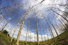 Forêt sèche Image libre de droits