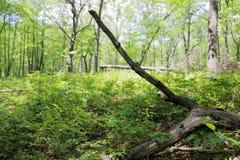 Forêt sèche d'identifiez-vous photo libre de droits