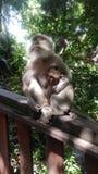 Forêt sacrée de singe dans Bali Photographie stock