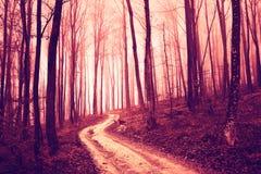 Forêt saturée par rouge rampant avec la route photos stock
