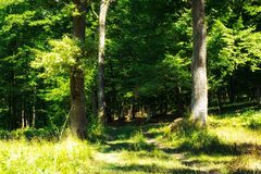Forêt sauvage Photographie stock