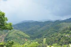 Forêt sauvage de nature Images libres de droits