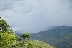 Forêt sauvage de nature Photographie stock libre de droits