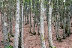 Forêt scénique fascinante d'arbre de hêtre Image stock