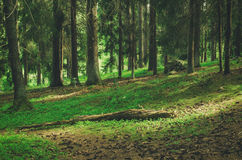 Forêt scandinave du nord photo stock