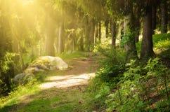 Forêt scandinave du nord image libre de droits