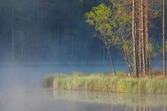 Forêt se reflétant au petit lac au matin image stock