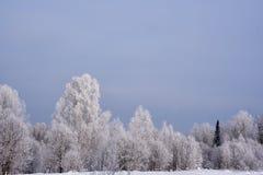 Forêt sibérienne congelée par hiver Photos stock