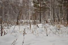 Forêt sibérienne dans le froid photos libres de droits