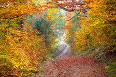 Forêt silencieuse d'automne - feuilles et arbres vibrants colorés, chute b Image stock