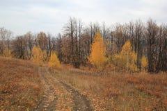 Forêt sinistre d'automne Photographie stock