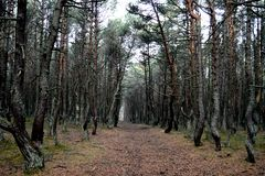 Forêt sinistre en automne photo stock