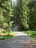 Forêt sinueuse de route Photographie stock