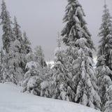 Forêt Snow-covered image libre de droits