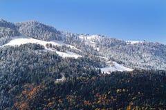 Forêt Snow-covered de pin Image libre de droits