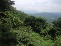 Forêt solitaire de jardin de tir Photographie stock libre de droits