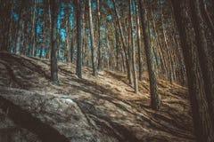 Forêt sombre Images libres de droits