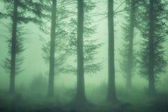 Forêt sombre avec le brouillard photos libres de droits