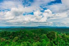 Forêt sous le ciel Image stock