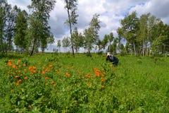 Forêt-steppes pendant l'été photo libre de droits