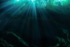 Forêt submergée photo stock
