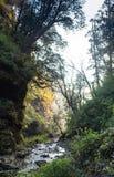 Forêt subtropicale au Népal Photo stock