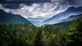 Forêt suisse Photos stock