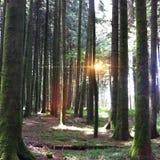 Forêt suisse Photo libre de droits