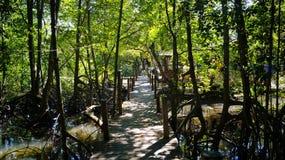 Forêt sur l'eau Photos stock