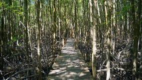 Forêt sur l'eau Photo libre de droits