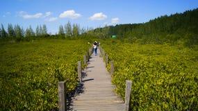 Forêt sur l'eau Images stock