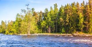 Forêt sur la côte de rivière, Kotka, Finlande Photographie stock libre de droits