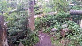 Forêt sur la colline Image stock