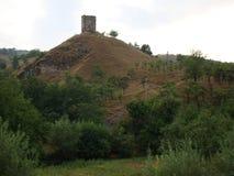 Forêt sur la colline images stock