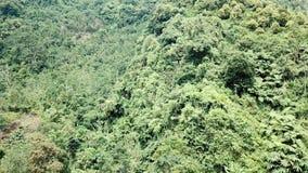 Forêt sur la montagne clips vidéos