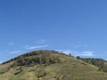 Forêt sur la montagne Images libres de droits