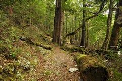 Forêt sur la piste ronde de Rotoiti de lac Images stock