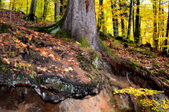 Forêt sur la route à Poiana Brasov Photos libres de droits