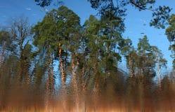 Forêt sur la surface de l'eau Photos stock